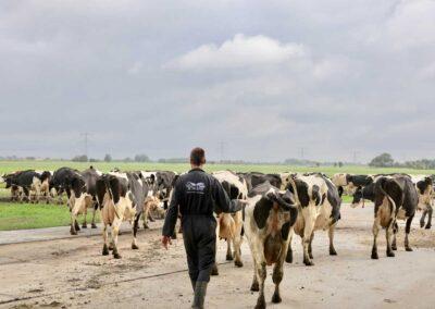 Melkveehouderij De Twee Hoeven